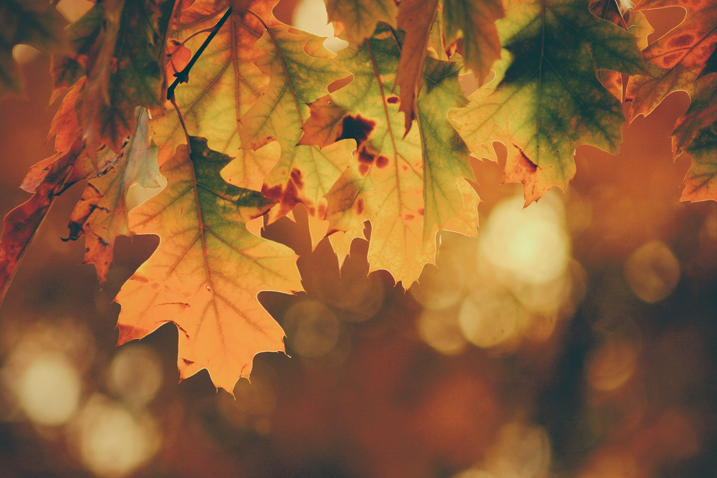Keeping Your Home Energy-Smart; Small Tips to Keep in Mind this Fall