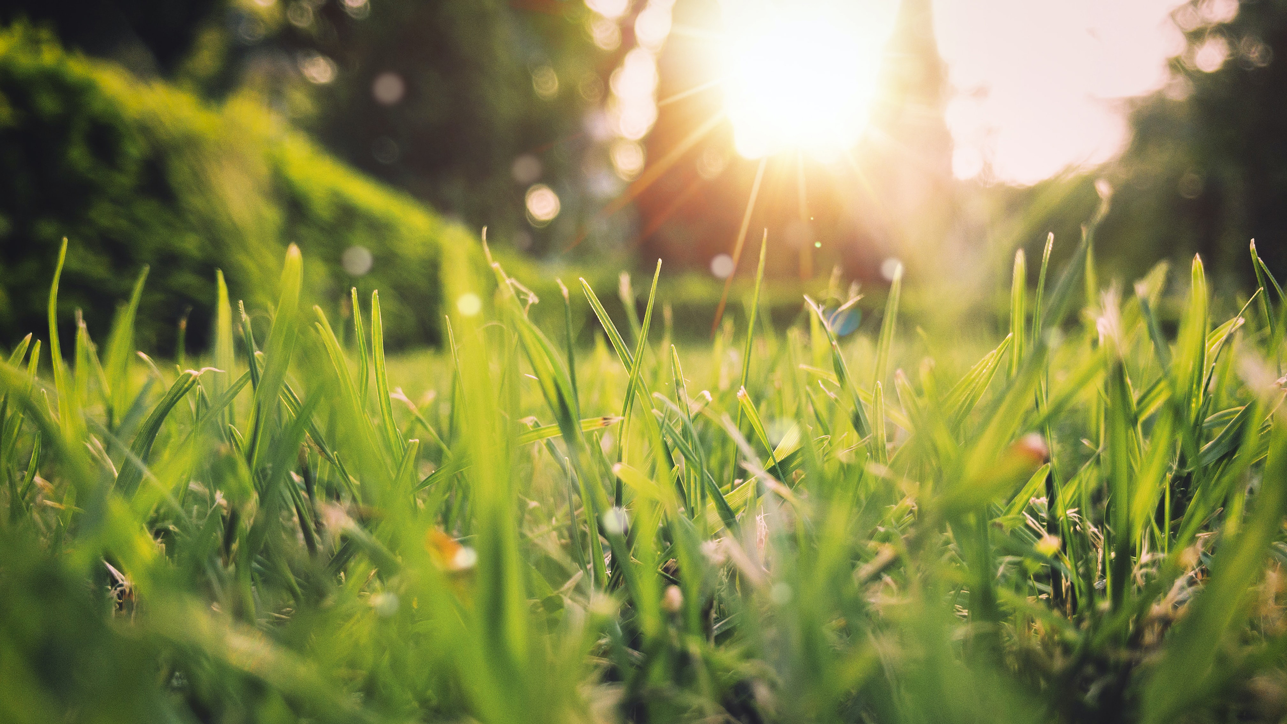 Buying, Selling or Upgrading Your Home for a Greener Spring